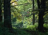 Rajské zahrady II Zapomenutý Bečov